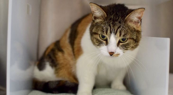 Cat of the Week: Patches title=