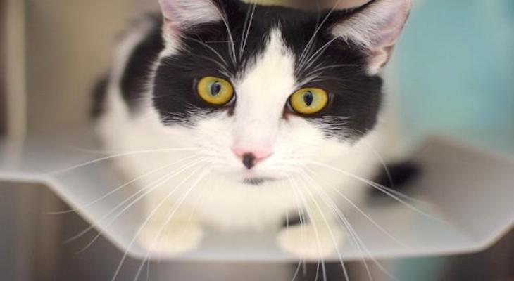 Bonkers is adoptable at ASAP Cats title=