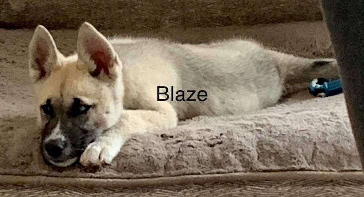 Dogs of the Week: Blade, Blaze and Bear