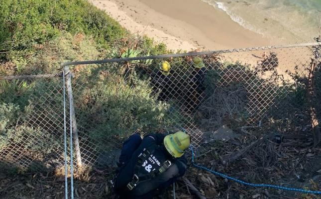 Two Dogs Rescued from Shoreline Cliff
