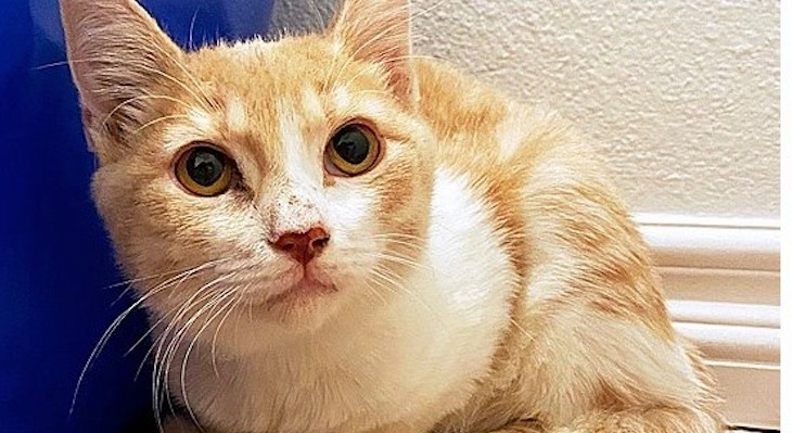 Cat of the Week: Wendy title=