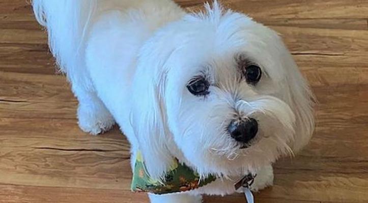 Dog of the Week: Duffy