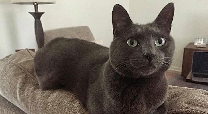Cat of the Week: Daisy Blu title=