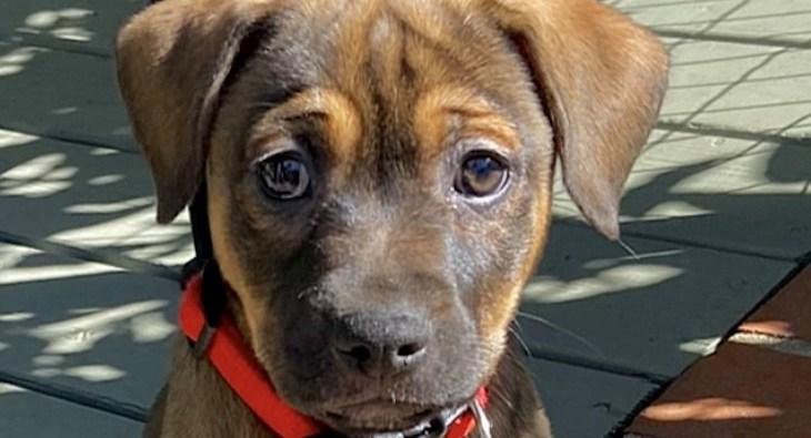 Dog of the Week: Tasia