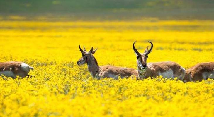 Businesses Sign Petition to Protect Carrizo Plains title=