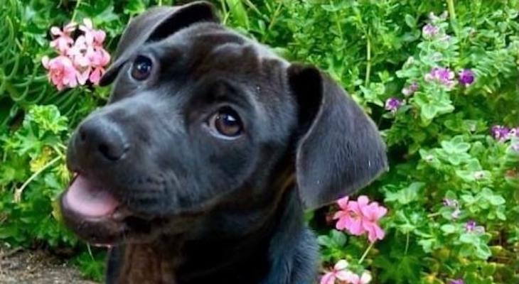 Dog of the Week: Tanya title=