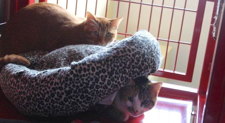 Cat of Week: Thomas & Tillie title=