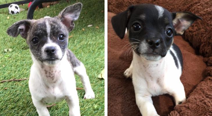 Dog of the Week: Preston & Precious title=