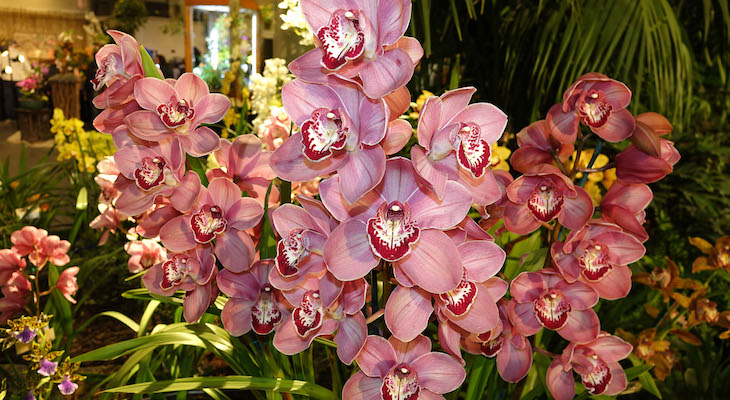Santa Barbara International Orchid Show