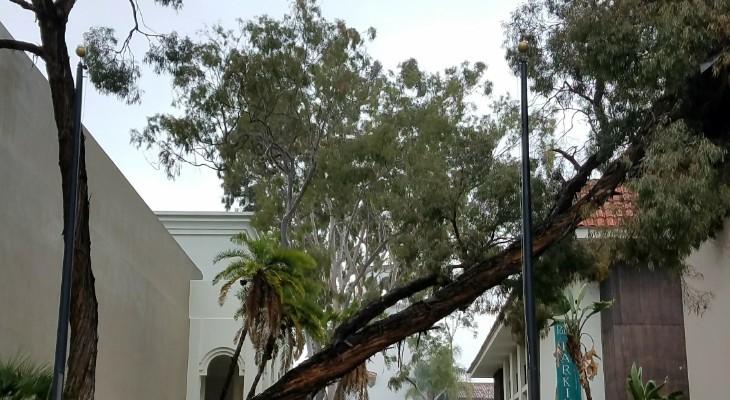 Tree Falls Near Public Library title=