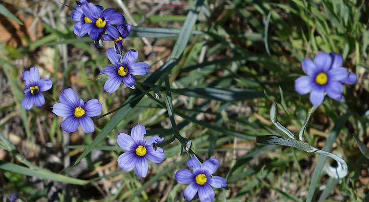 Figueroa Mountain Wildflower Hike title=