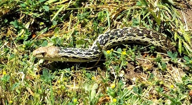 Snake Identification