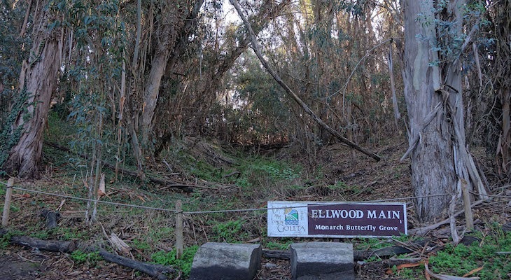 Ellwood Trails Reopen, Enter at Your Own Risk