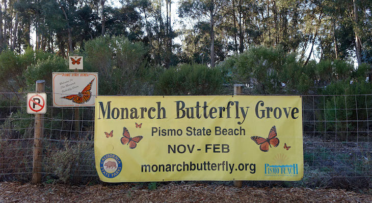 Monarch Butterflies at Pismo State Beach title=