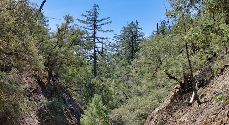 Sierra Club Hikes Fir Canyon title=