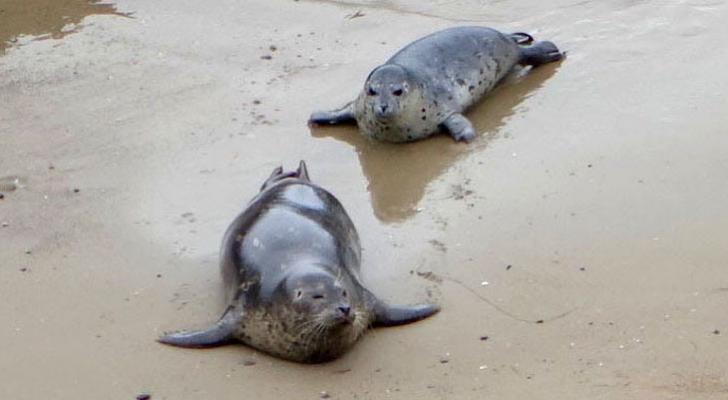 Carpinteria Seal Pups and Salt Marsh Sierra Club Hike title=