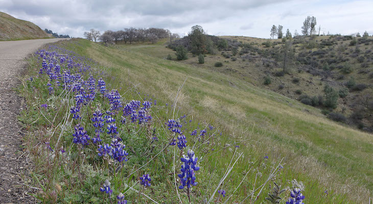 Figueroa Mountain Wildflower Update