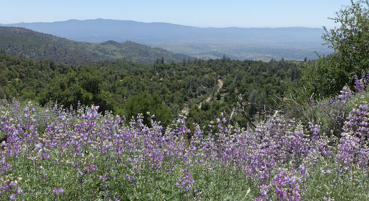 First Figueroa Wildflower Update for 2021