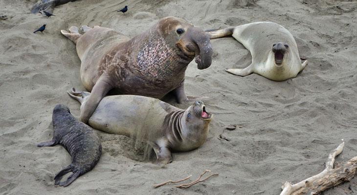 Elephant Seals at San Simeon title=