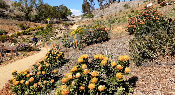Ventura Botanical Gardens title=