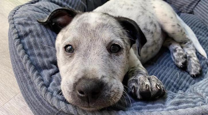 Dog of the Week: Ellie