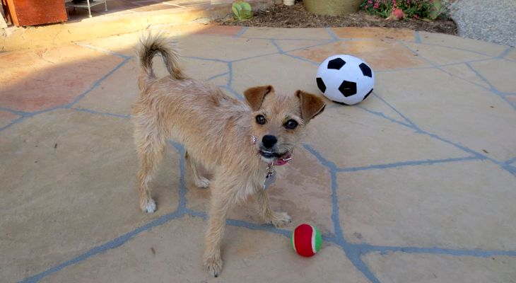 Dog of the Week: Piper title=