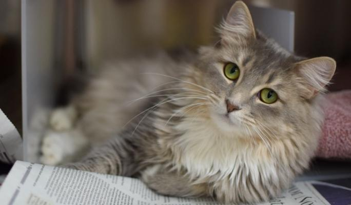 Cat of the Week: Nona