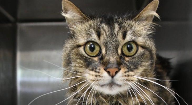 Cat of the Week: Squeaky