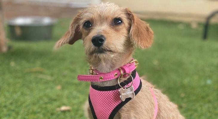 Dog of the Week: Poppy
