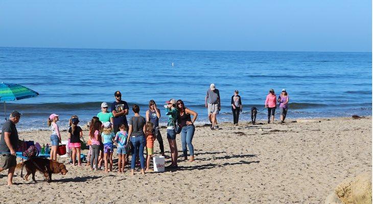 Coastal Cleanup on September 18th