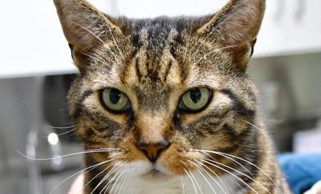 Cat of the Week: Sofia