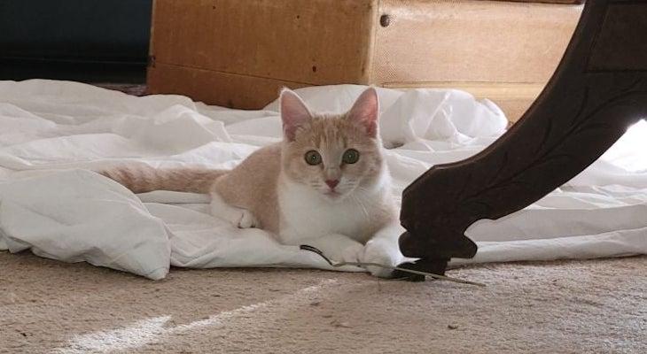 Cat of the Week: Josie