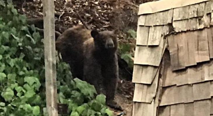 Bear at Cold Spring Tavern