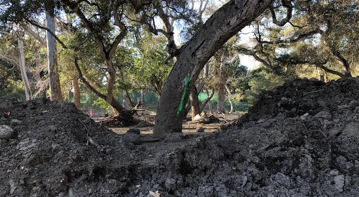 Trees Covered in Mud Susceptible to Suffocation