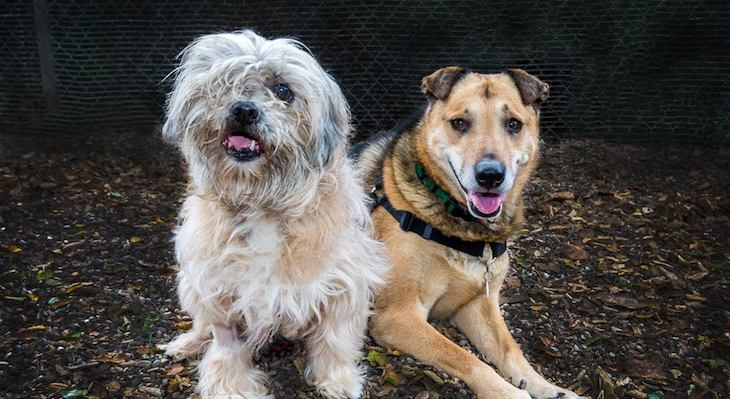 Dogs of the Week: Sadie and Yuma