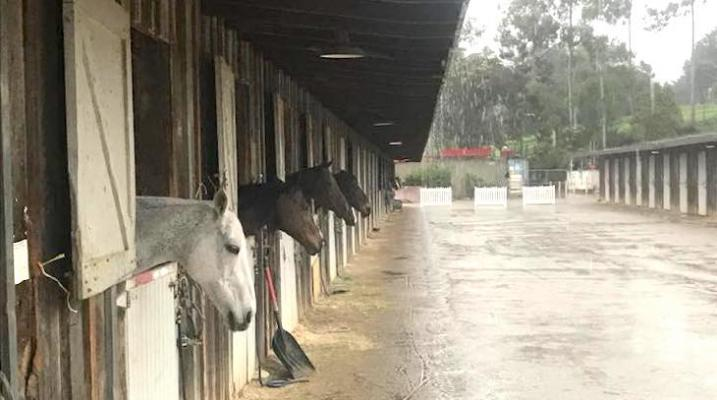 Earl Warren Showgrounds Partners with Equine Evacuation in Renovation