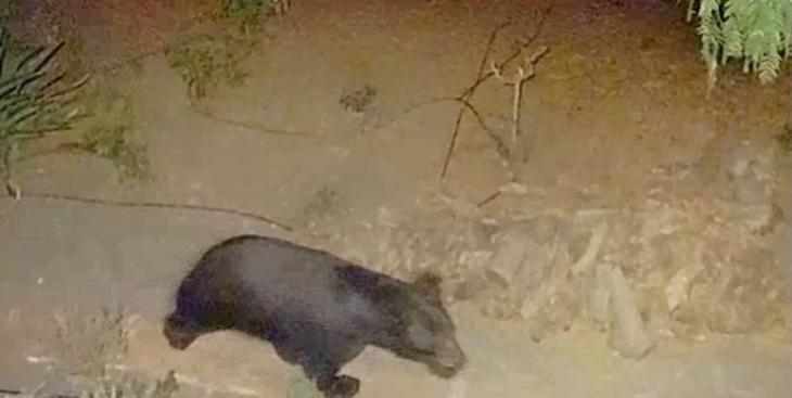Bear Spotted Off Barker Pass
