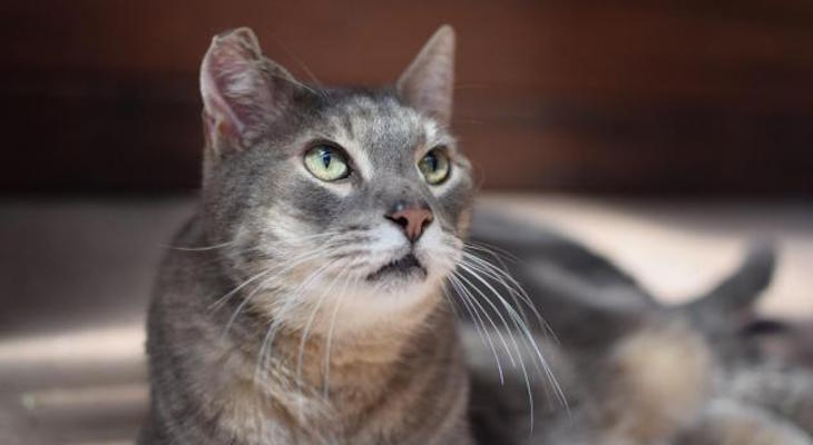 Cat of the Week: Moose
