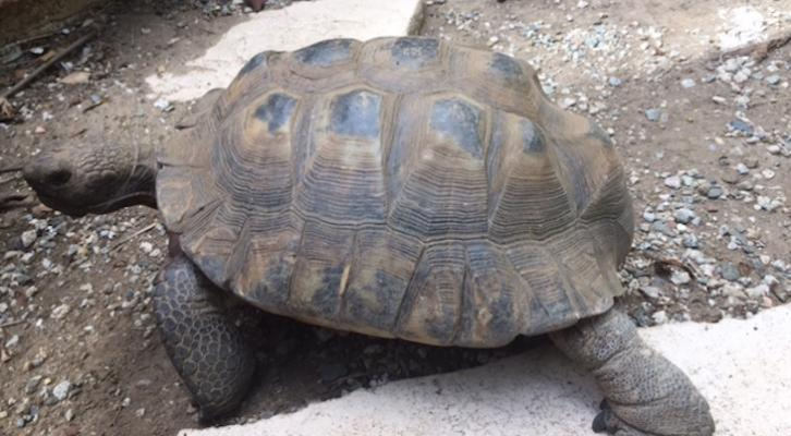Desert Tortoise Holding On