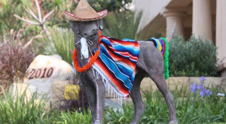 Garden St Dog Dressed Up for Fiesta title=
