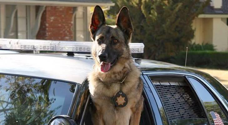 Sheriff's Office Retired K-9 Betti Passes Away title=