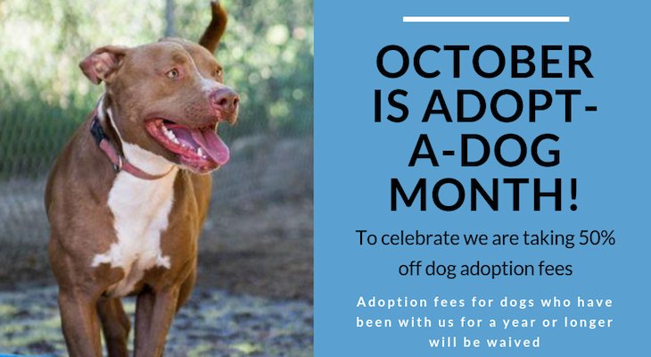 National Adopt a Shelter Dog Month title=