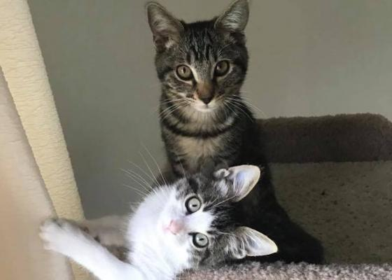 Cats of the Week: Boo and Ollie