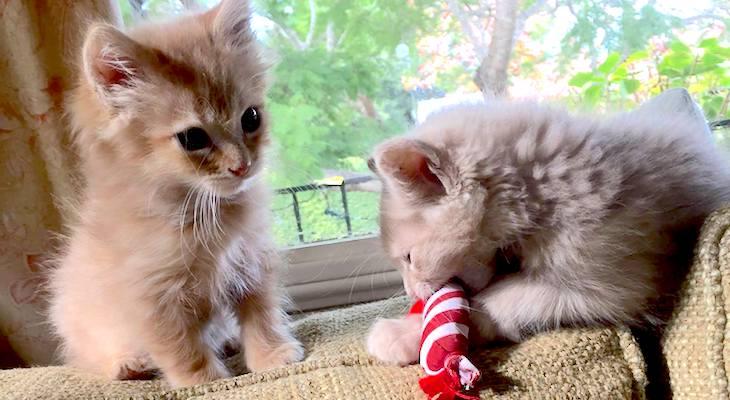 Cats of the Week: Moe & Jack