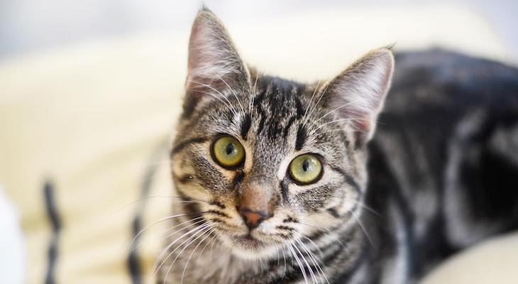Cat of the Week: Jade title=