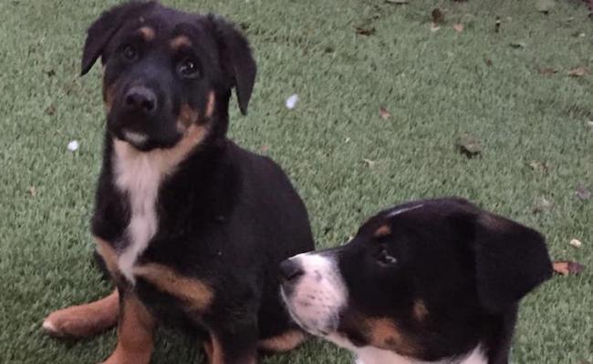 Dogs of the Week: Hansel & Gretel title=