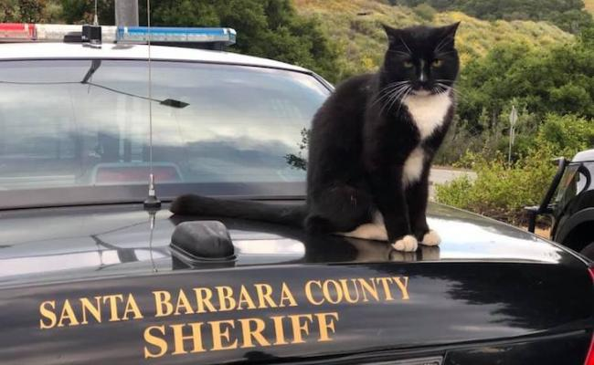 Sheriff's Office Facilitates Purrfect Cat Reunion title=