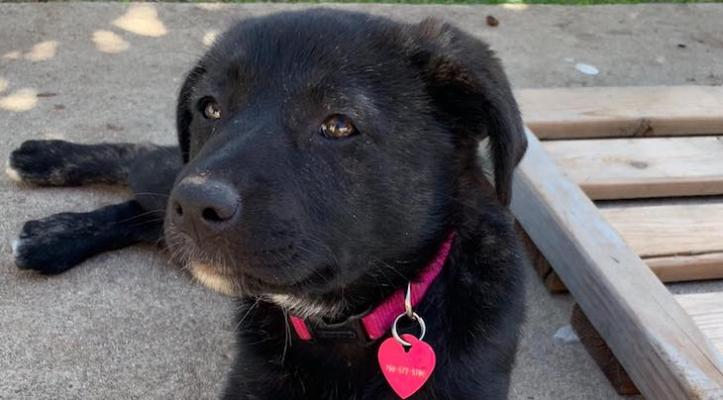 Dog of the Week: Indi title=