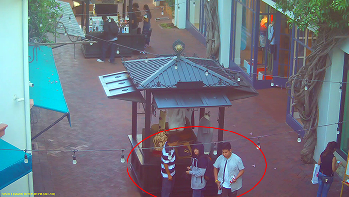 Searching for Theft Suspects