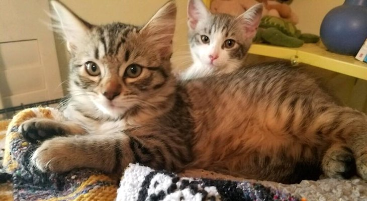 Cats of the Week: Le Tigre & Bo
